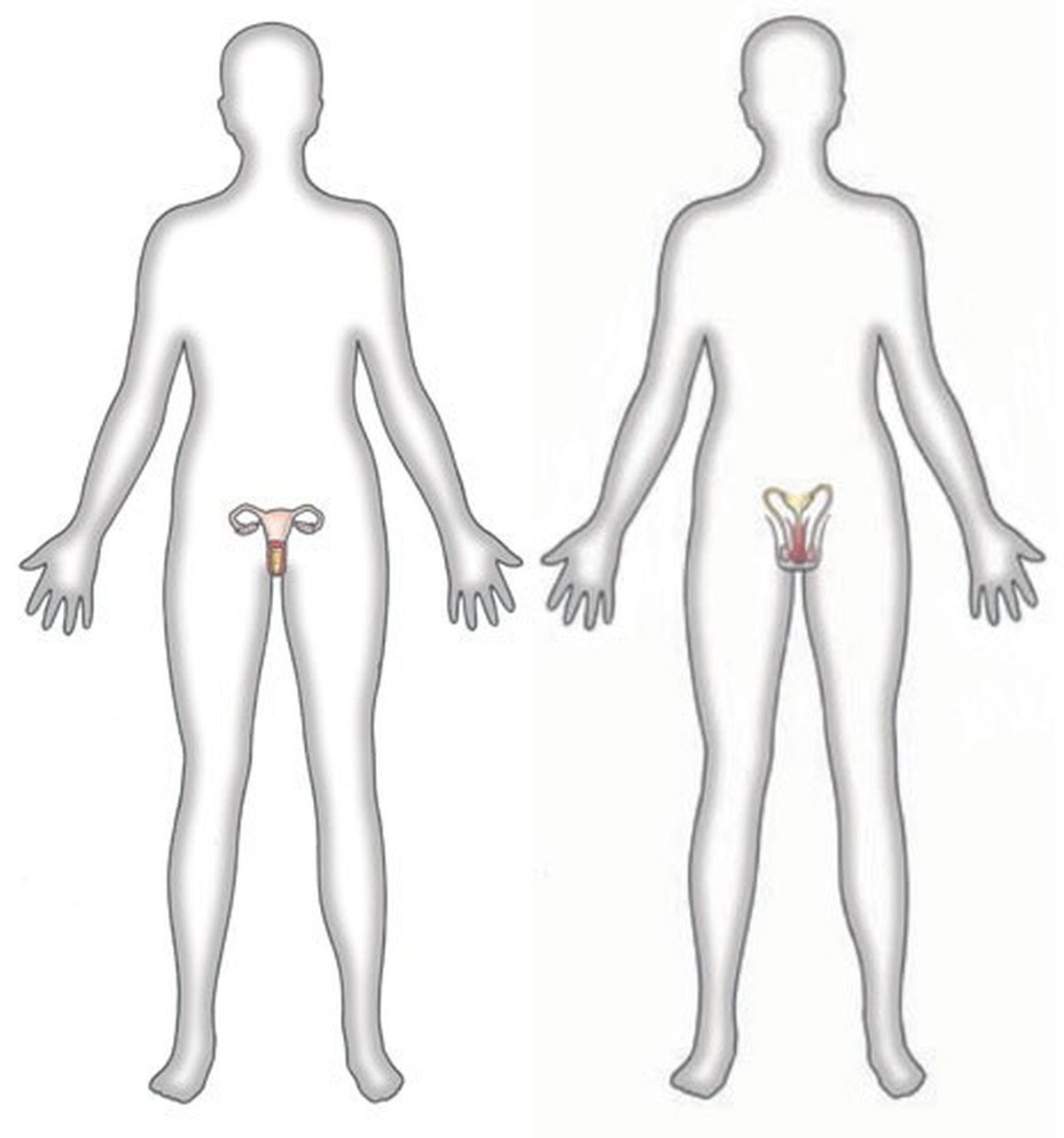 Male and female bodies